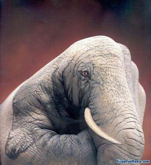 Painted Hand Illusion - Elephant