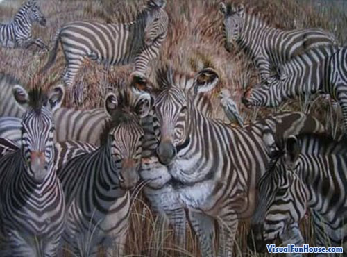 Hidden Lion in Zebras Optical Illusion