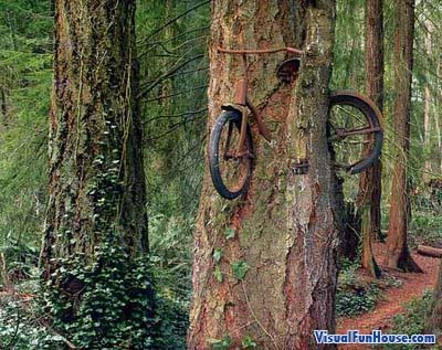 Amazing Bike Tree optical illusion