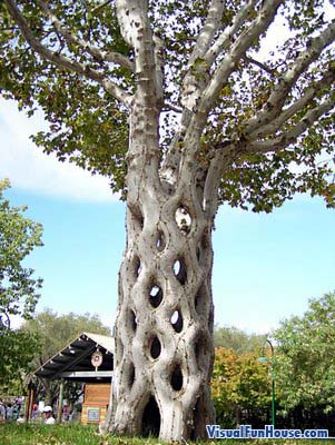 Amazing Column Tree Optical Illusion