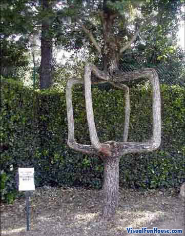 Amazing Split Tree Optical Illusion