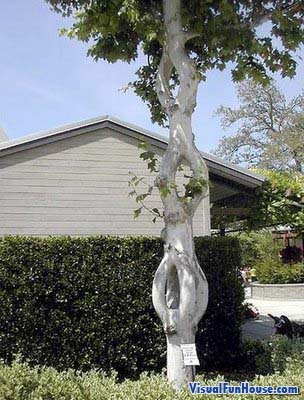 Chain Tree Optical illusion