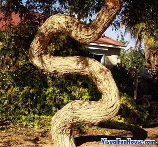 Snake Tree Optical Illusion
