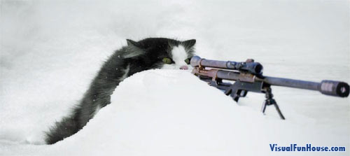 Sniper cat, this is one cat you don </p> <span style=