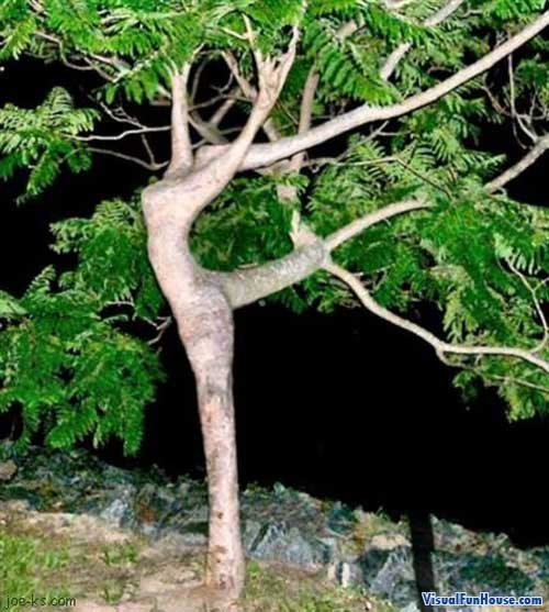 This beautiful dancer shows her beauty from inside of these tree branches