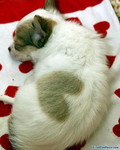 Heart Puppy Sleeping