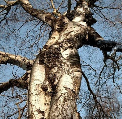 Nude lady growing in the tree branches