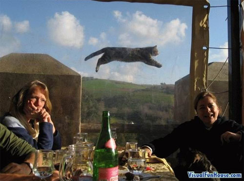 Super cat flying through the air!