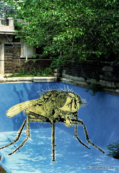 3D Giant Fly in a swimming pool, watch out kiddies!