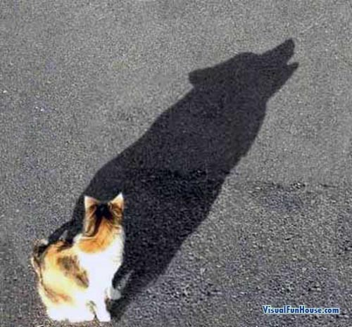Wolf in the cats shadow