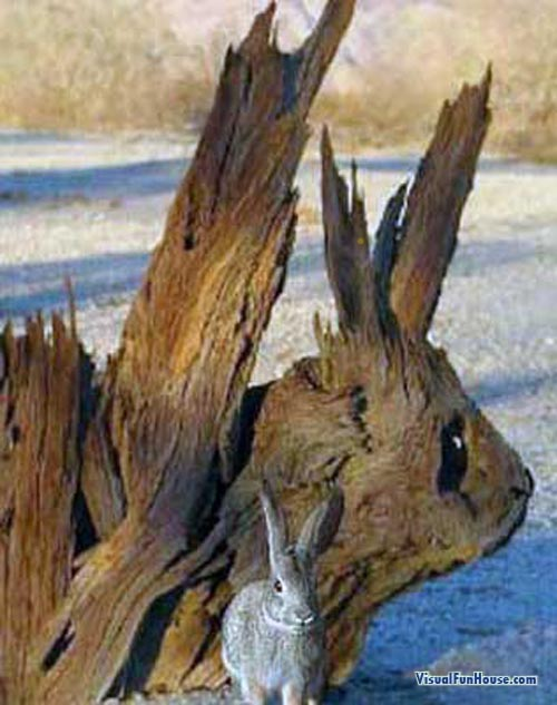 Cute little rabbit standing in front of his wooden self portrait.