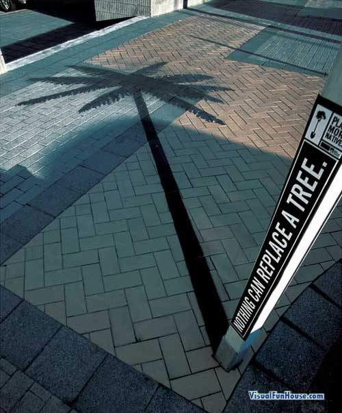 Palm Tree Shadow Illusion