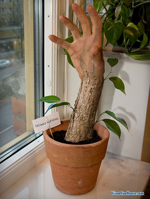 Ever wanted to grow your own Tree Hand?
