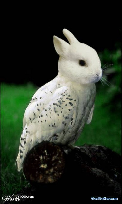 Rabbit Bird